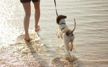 Jak często chodzić z psem do weterynarza